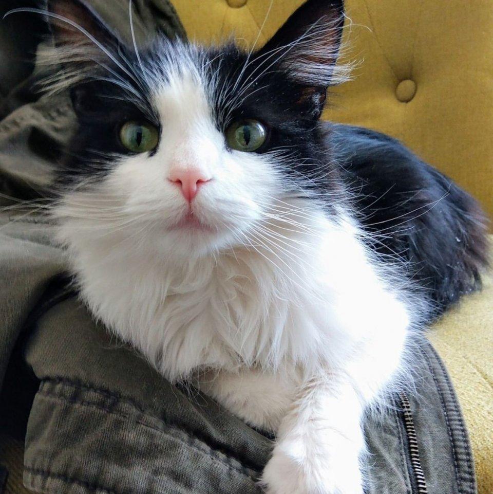 Profile image of Nadja